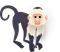 Capuchin Monkey pack